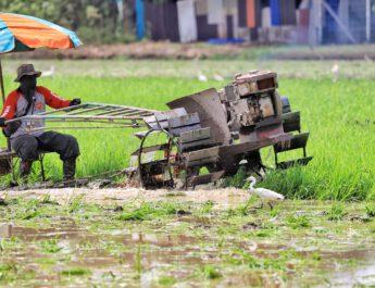 ปทุมธานี   ชาวนาปทุมฯคึกคักเร่งไถนาปรับพื้นที่ เตรียมลงมือหว่านปลูกข้าวหลังฝนตกอย่างต่อเนื่อง